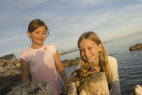 Little girls, by the sea, crab on a rock