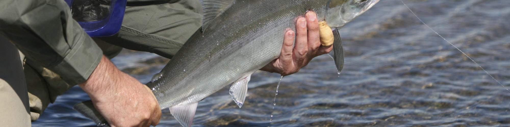 Pêcheur tenant un poisson