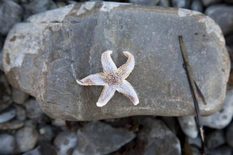 Étoile de mer sur une roche