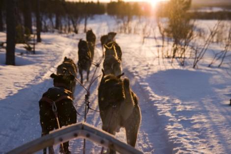 Traîneau à chiens, hiver